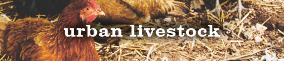 Urban Livestock