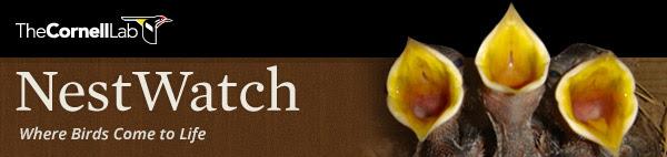 NestWatch logo