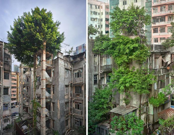 Природа против бетона дерево, живучесть, жизнь, мир, планета, растительность, фото