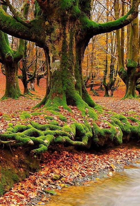 Mossy Roots, Sintra, Portugal