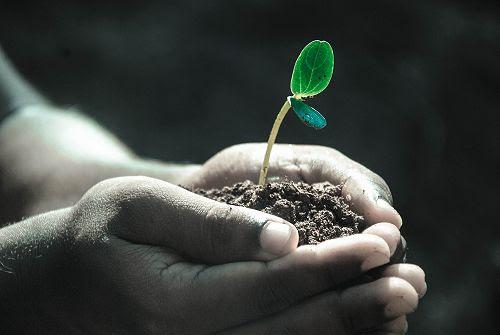 Grow & Sustain