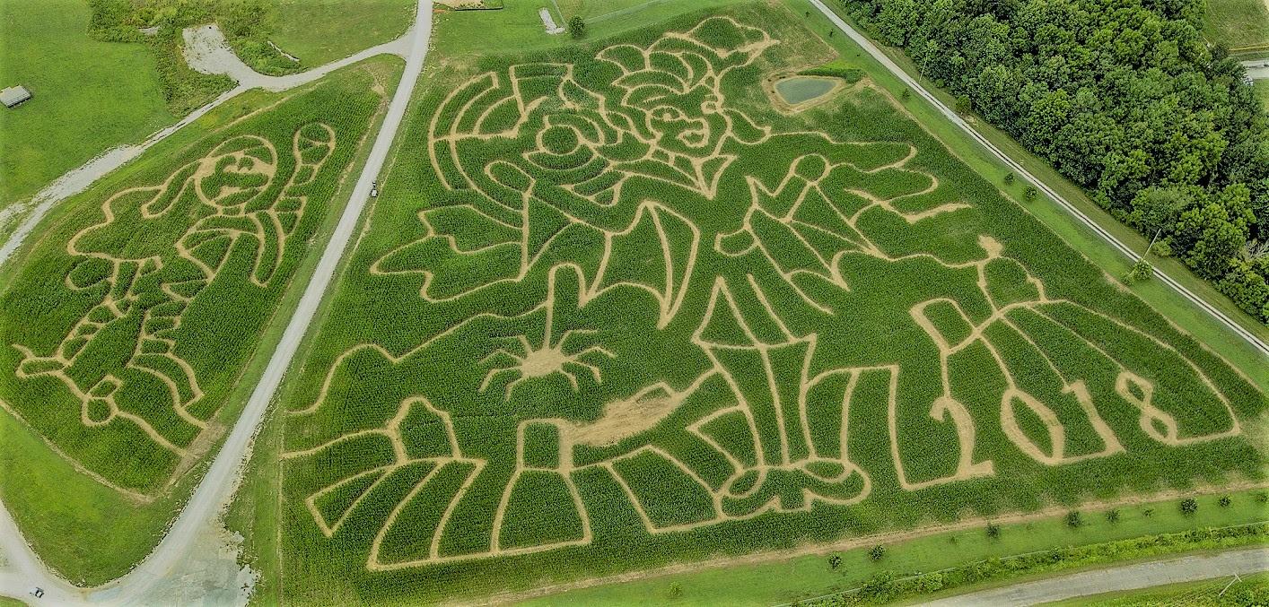 Corn Maze at Holiday World