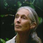 Jane Goodall: Profile