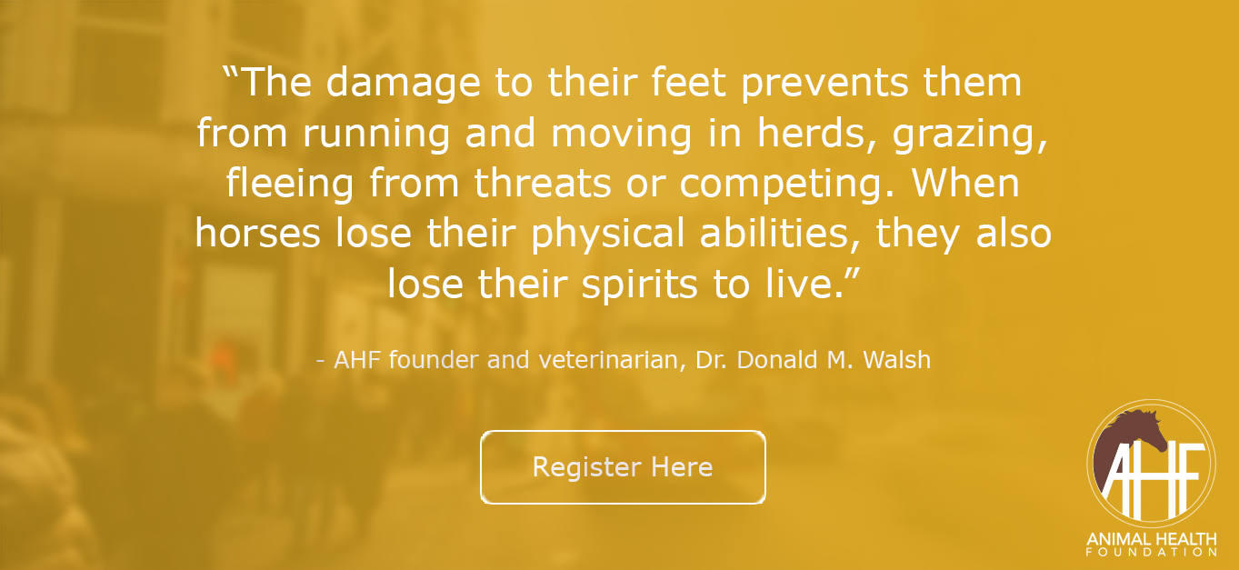 The damage to their feet prevents them from running and moving in herds, grazing, fleeing from threats or competing. When horses lose their physical abilities, they also lose their spirits to live.