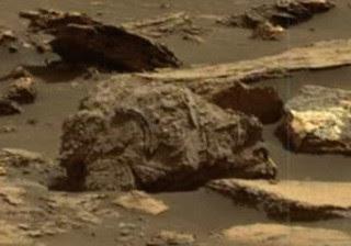 Robô da NASA flagra urso pardo fossilizado em Marte