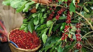 Los complejos efectos de la escasez de contenedores en el comercio internacional de café