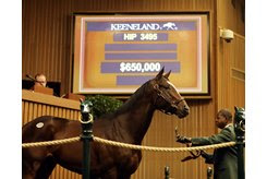 Federal Case in the ring at the Keeneland November Sale