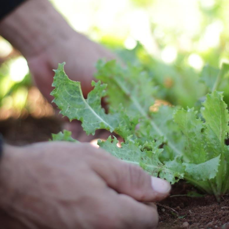 Cultivos en Paraguay. © Banco Mundial