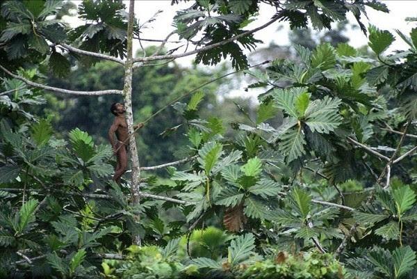 Bộ tộc                                   sống trên cây duy nhất ở Trái đất 13